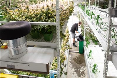 ActivRAC provides more cannabis and more aisle space to tend to the plants.jpg