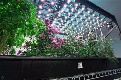 Indoor farm hydroponics moving shelving on ActivRAC mechanical assist.jpg