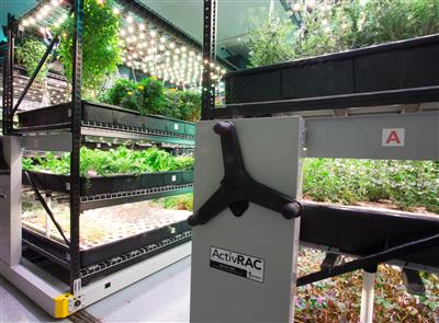 Farm One hydroponic herb shelves.jpg